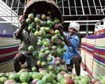 Mango reigns