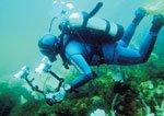 Plunge into marine biology