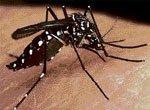 Cases of dengue fever increasing in City