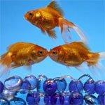 An 'eye catching' discovery made among fish