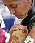 15 street pups find homes in B'lore