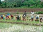 Scanty rains hit agricultural activities in Kushalnagar taluk