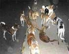Biting dogs make news in City