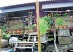 Thai home designs