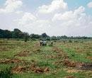 Youths take initiative to develop biodiversity park