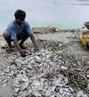 Fish kill in Jakkur lake