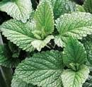 Herb that heals
