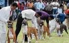 It'll be lovely Sunday outing for dog lovers