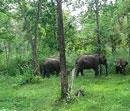 Centre mulls stringent law to protect biodiversity hotspots