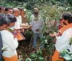 MLA visits coffee plantations in C'magalur