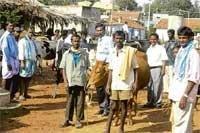 'Cattle play vital role in  economic development'