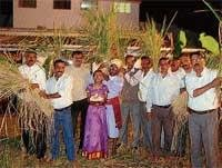 Hutthari celebrated with fervour in Kushalnagar