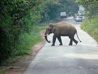 Tusker found crossing NH in Shiradi Ghat stretch