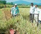 Demonstration on paddy crop cutting machine held