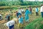 Migrant workers boon to farmers