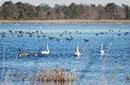 Quaint Chilka lagoon still bird poachers' haven