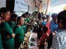 Thousands visit 'Hallihabba'