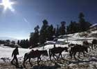 Heavy snow cuts off Kashmir valley,cold wave toll mounts to 84