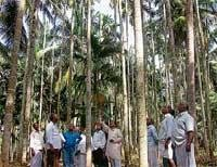 Youth Cong plans jatha over areca disease