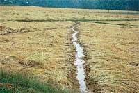 Untimely rains damage crops in 7,154 acres