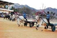 Sankranti celebrated in full spirit