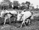 Agriculture left to die at India's peril