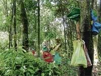 'Trees help in temperature reduction, pollutants'