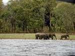 Let's head to Kabini