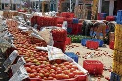 Tomato growers in distress