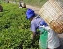 Cabinet nod to plantation workers bill