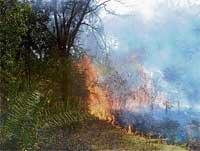 Forest fire didn't harm animals: CM