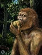New species of ancient human 'discovered'