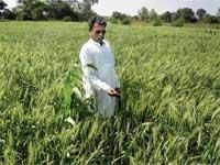 Krishi Pandit award for Gulbarga farmer