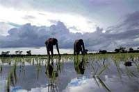 Voicing farmers' concerns