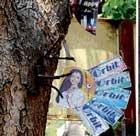 Nail assault rampant on roadside trees