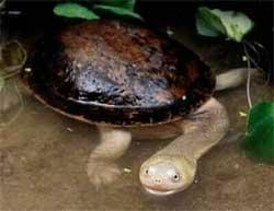 Oil leak from ship threatens endangered turtles