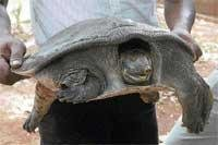 Trio return turtle to its habitat
