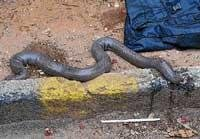 Boa slithering out of bag empties bus of its passengers