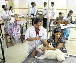Pet owners flock to hospital on World Veterinary Day