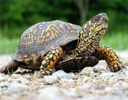 'Goa's turtle conservation programme a model for others'