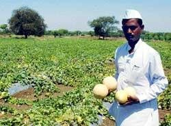 Vermicomposting turns into fortune for Gulbarga farmer