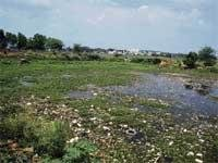 Palike seeks Central  aid to revive lakes
