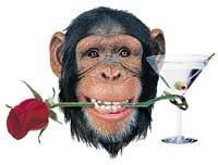 Chimpanzees too use sex tool
