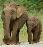 Elephant census from May 15
