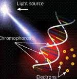 DNA to replace the chip