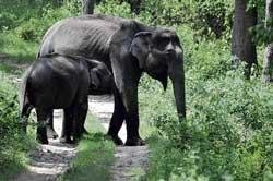 Elephant found dead on Day One of census
