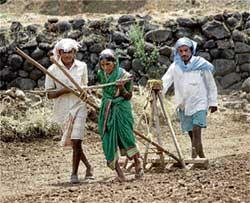 Govt encouraging farmers to make use of good rains