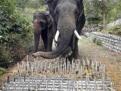 The pegs that can give jumbos a headache