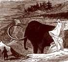 Mammoth clues
