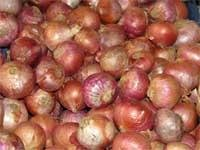 India set for record onion produce this year